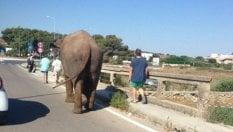 """""""Troppi incidenti nei circhi, l'Ue vieti gli spettacoli con animali"""""""